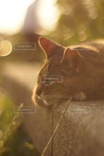 黄昏れる猫と通り過ぎる人の写真・画像素材[4510552]