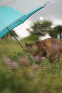 子ども用傘と猫の写真・画像素材[4601195]