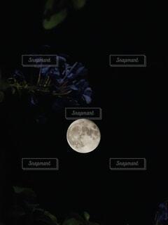 自然,風景,空,建物,花,屋外,暗い,鉄塔,お花,光,タワー,電線,月,デザイン,ブルー,満月,まんまる,シンボル,マーク,月光,中秋,中秋の名月,コラボ,夜散歩,8年ぶり