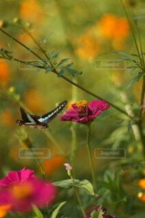 近所の花公園のガーデニングの写真・画像素材[4911271]