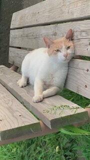 猫,公園,動物,屋外,緑,白,かわいい,景色,オレンジ,草,寝る,オシャレ,リラックス,座る,可愛い,安心,野良猫,木目,お洒落,愛しい,トリックアート,ストレッチ,愛らしい,おしゃれ,猫ちゃん,癒させる,アップサイドダウン,オシャレボーイ,安心して,またかるから,のらりくらり