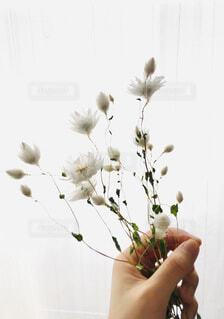 白い花。の写真・画像素材[4215399]