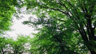 自然,風景,空,公園,夏,森林,木,屋外,緑,葉っぱ,散歩,葉,樹木,休憩,音,外,大きい,癒し,シンプル,風,ナチュラル,初夏,マイナスイオン,昼間,ゆらゆら,樹,曇,くもり,和み,草木,休息,イメージ,動画,涼む,日影,ユラユラ,ムービー,なびき
