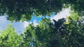 自然,風景,空,秋,森林,屋外,太陽,緑,白,雲,青空,水,川,反射,光,爽やか,背景,手持ち,樹木,外,竹,癒し,旅行,旅,シンプル,竹林,ナチュラル,伊豆,快晴,マイナスイオン,雰囲気,せせらぎ,加工,草木,高い,イメージ,お天気,動画,流れる,物語,スロー,トリップ,足音,編集,砂利道,ストーリー,ムービー,川の音,補正,切り貼り