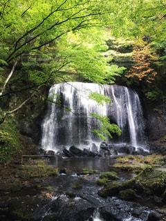 水,水辺,滝,新緑,不動滝,達沢不動滝