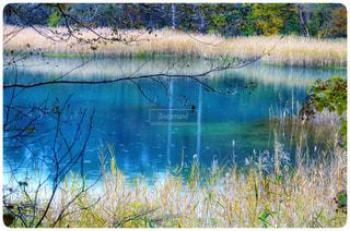 青の五色沼の写真・画像素材[1133808]