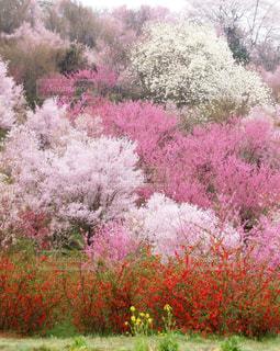 花,景色,新緑,花園,フォトジェニック,花見山