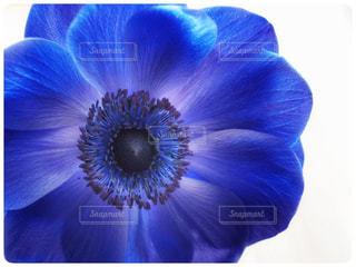 花の写真・画像素材[1975403]