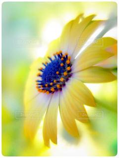 花の写真・画像素材[1976485]