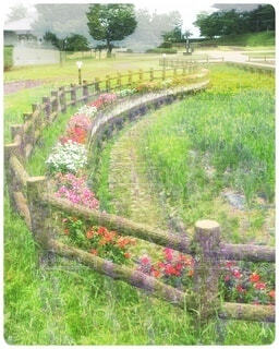緑豊かな公園の写真・画像素材[4931727]