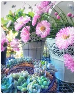 ベランダの花の写真・画像素材[4932289]