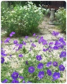 紫色の花の写真・画像素材[4941762]