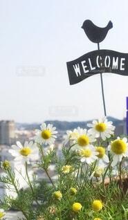 ベランダガーデンに咲く花の写真・画像素材[4941838]