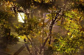 夜,屋外,大阪,樹木,イルミネーション,梅田,装飾,明るい,グランフロント,ゴールド,グランフロント大阪,大阪イルミネーション,シャンパンゴールド