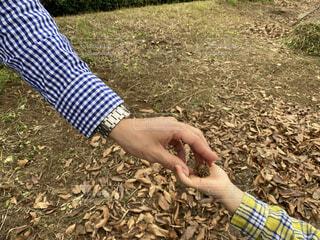秋のお散歩の写真・画像素材[3782800]