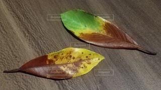 秋,葉っぱ,落ち葉,ハート模様,色の変化