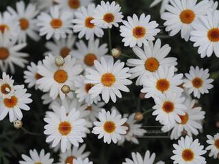 花,白,草木,ありのまま,バイワンシー,バイワンシーでありのままに,byonesii