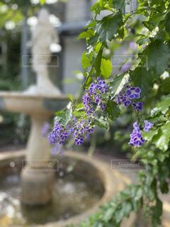温室の可憐な花の写真・画像素材[3854388]