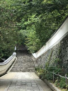 新緑の中の石段と石垣の写真・画像素材[4457316]