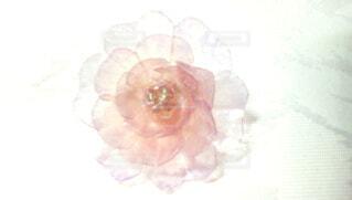 ピンクの薔薇の写真・画像素材[3788782]