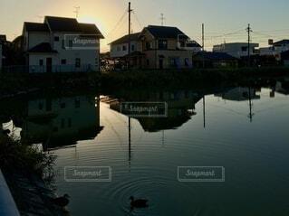 朝日と池と鴨の写真・画像素材[3814297]