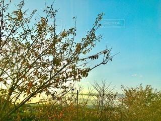 紅葉とさわやかな秋空の写真・画像素材[3836290]