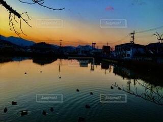 池の鴨と夕日の写真・画像素材[4006957]