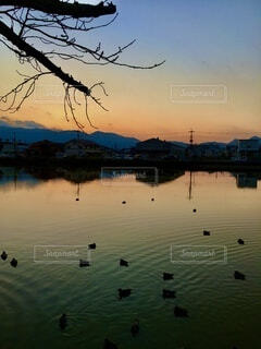 優しい夕陽と鴨の写真・画像素材[4006959]