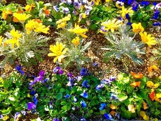 真冬に咲く花たちの写真・画像素材[4051787]