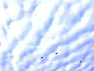 羽ばたくの写真・画像素材[4113273]
