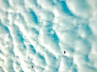 エメラルド色のウロコ雲の写真・画像素材[4113284]
