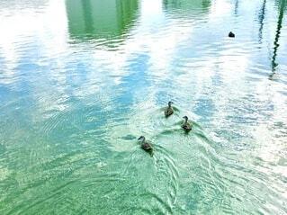 水面の写真・画像素材[4122635]