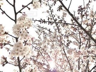 枝の共演の写真・画像素材[4297943]
