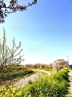 小春日和の写真・画像素材[4310249]
