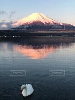 富士山と白鳥の写真・画像素材[3794524]