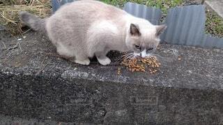 建物の上に横たわっている猫の写真・画像素材[3798095]