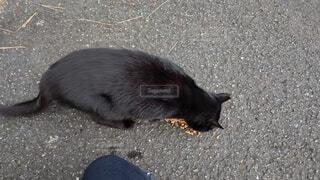 地面に横たわっているネコの写真・画像素材[3798094]