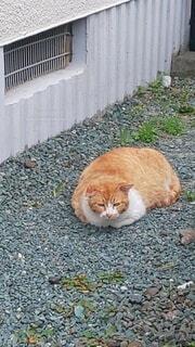 うつらうつら ネコちゃんのまったりタイムの写真・画像素材[3798445]