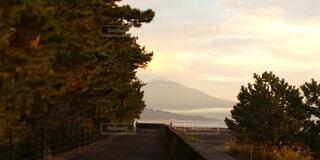 夕日の前の木の写真・画像素材[3798506]