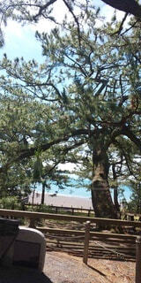 三保の松原の写真・画像素材[3822177]
