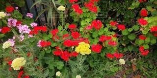 かれんな花たちの写真・画像素材[3822179]