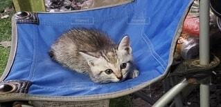 青い毛布の上に横たわっている猫の写真・画像素材[3804927]
