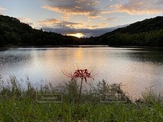 湖と夕日と彼岸花の写真・画像素材[3801362]
