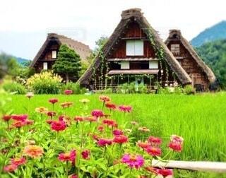 山林や田に囲まれた白川郷に咲く花の写真・画像素材[3977738]