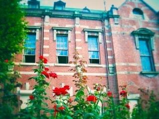 レンガ造りの建物の前に咲く沢山の赤い薔薇の写真・画像素材[3980586]