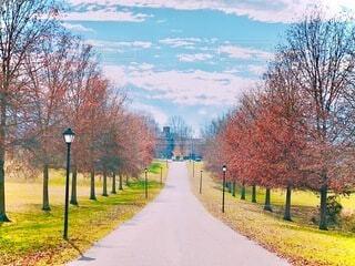 秋空の下の並木道の写真・画像素材[3986520]