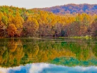 東山魁夷が描いたため池の紅葉と山の写真・画像素材[3987396]