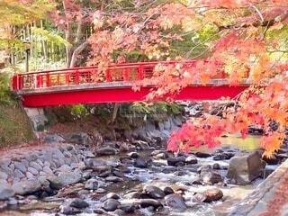 石が沢山ある川にかかる橋と紅葉の写真・画像素材[3998114]