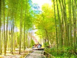 竹林の真ん中の歩道の写真・画像素材[3998131]