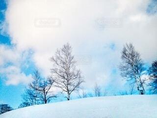 青い空と雪の斜面の樹木の写真・画像素材[4003749]
